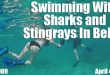 Swimming With Sharks and Stingrays In Belize FT-02